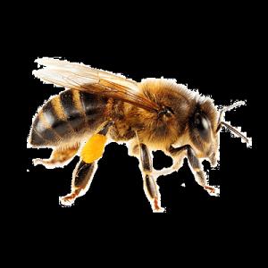 imagen de un abeja en pagina de imagen3web